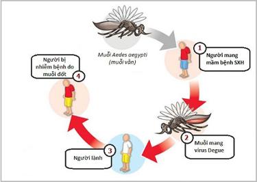 Bệnh sốt xuất huyết và cách phòng, chống